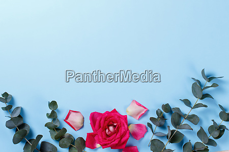 spring composition with rose and petals