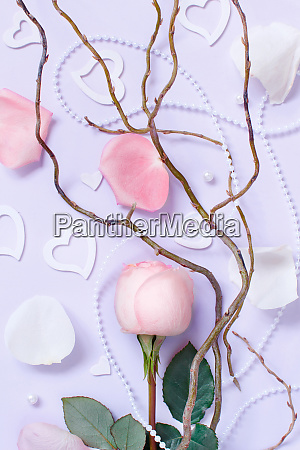 spring composition with rose petals and