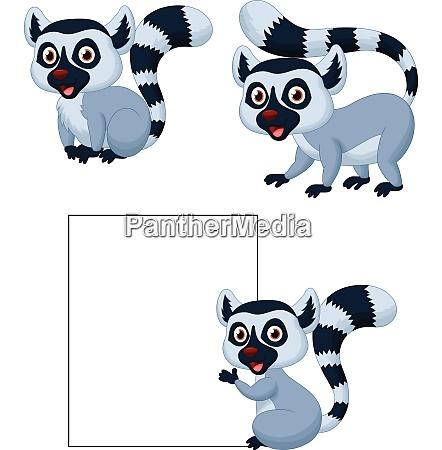 cute raccoon cartoon set