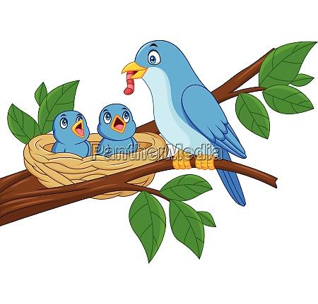 mother blue bird feeding babies in