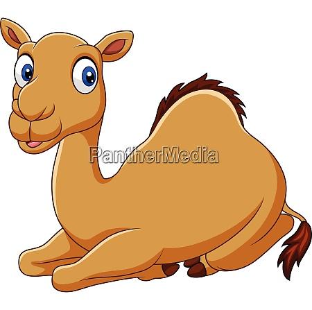 cartoon funny camel sitting