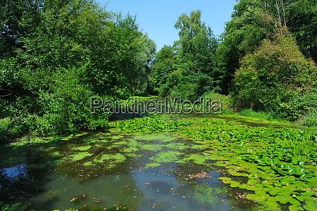 luhe river in summer winsen luhe