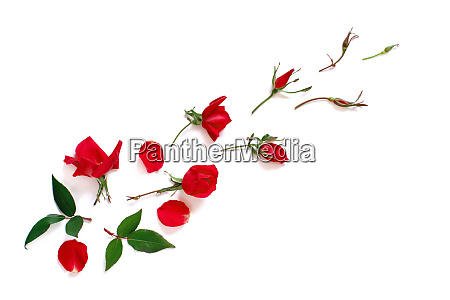 spring composition with red roses over
