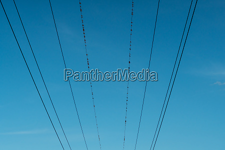 birds sitting on power lines