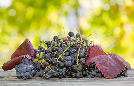 grapes outdoor