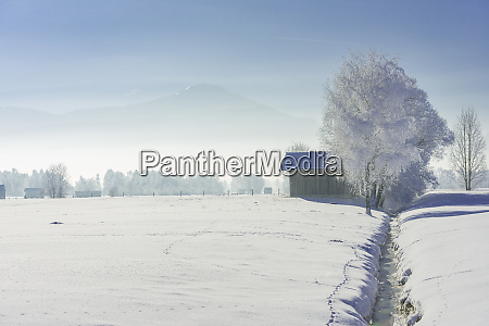 alpine foothills in the fog