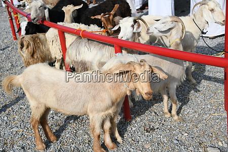 coronavirus china sars animal market livestock