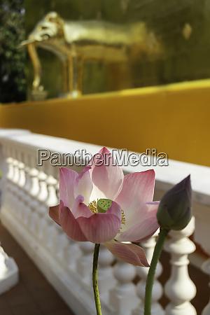 thai buddhist public temple with good