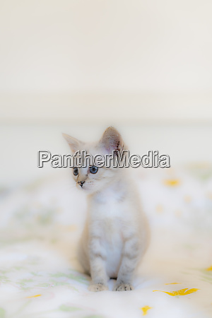 close up of cute kitten looking