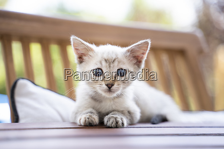 close up portrait of cute kitten