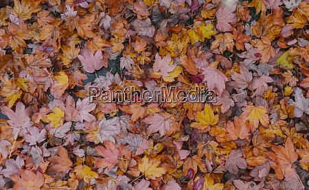 autumn leaves covering soil