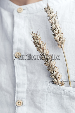 oat ears in the shirt pocket