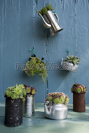 various succulent plants on table and