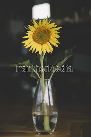 close up of sunflower in vase
