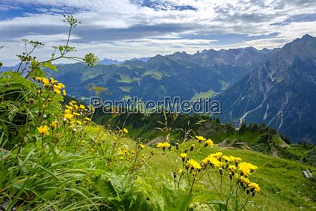 austria vorarlberg mittelberg wildflowers blooming against