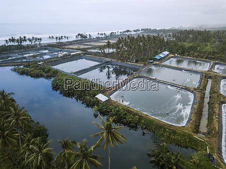 aerial view of shrimp farm bali