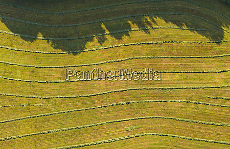 aerial view of agricultural field harmating