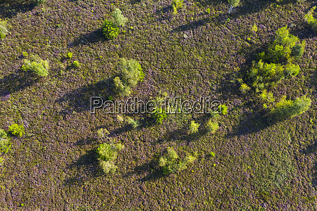 aerial view of trees on land