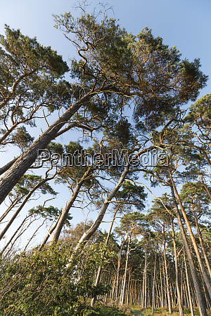 germany darss low angle view of
