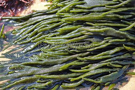 portugal alentejo vila novademilfontes seaweeds on