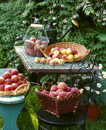 baskets of fresh peaches on table