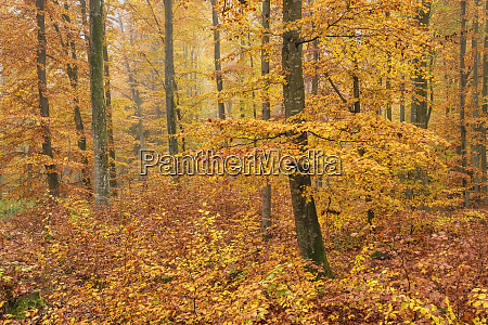 orange trees in forest during autumn