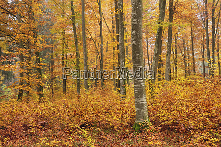 trees in forest during autumn at