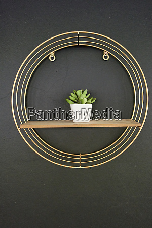 flowerpot on wooden board black wall