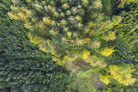 aerial view of forest with reforestation