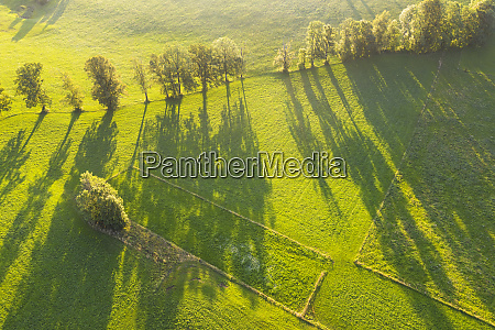 aerial view of trees with long