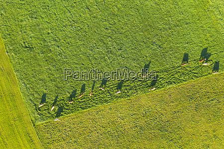 germany bavaria jachenau aerial view of