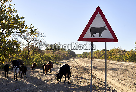 beware of cow signs by dirt