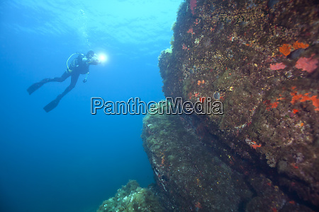 france corsica sagone underwater view of