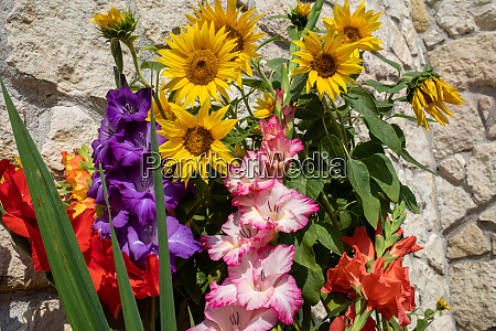 blooming sunflowers and colorful gladioli against
