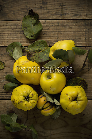 fresh yellow quinces lying on wooden