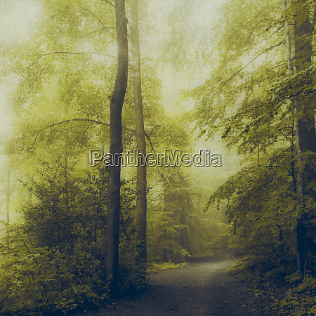 deciduous forest in the morning light