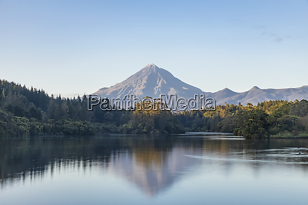 new zealand scenic view of forest