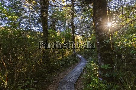new zealand boardwalk of taranaki falls