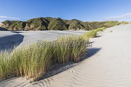 new zealand south island tasman grass