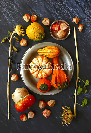 still life with ornamental pumpkins