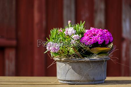 germany schleswig holstein flensburg flowers in