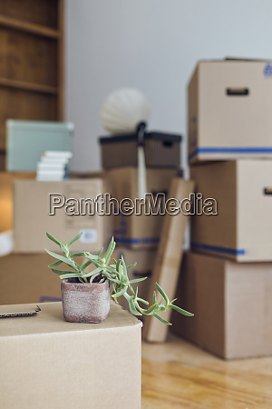potted plant on cardboard box in