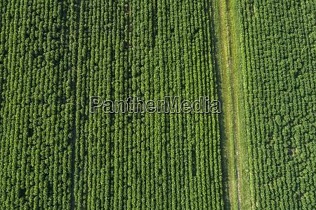 germany bavaria aerial view of crops