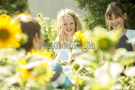 school children examining sunflower field