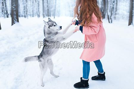 pretty woman with playful husky dog
