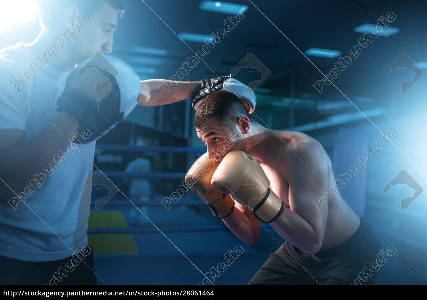 boxer, in, gloves, exercises, with, sparring - 28061464