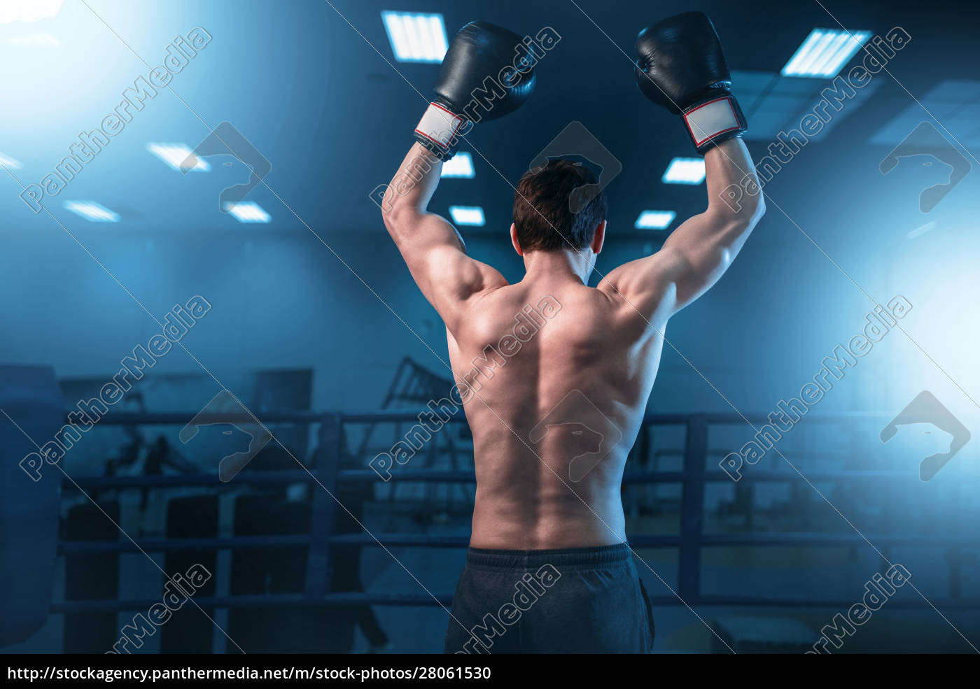 boxer, in, gloves, hands, up, on - 28061530