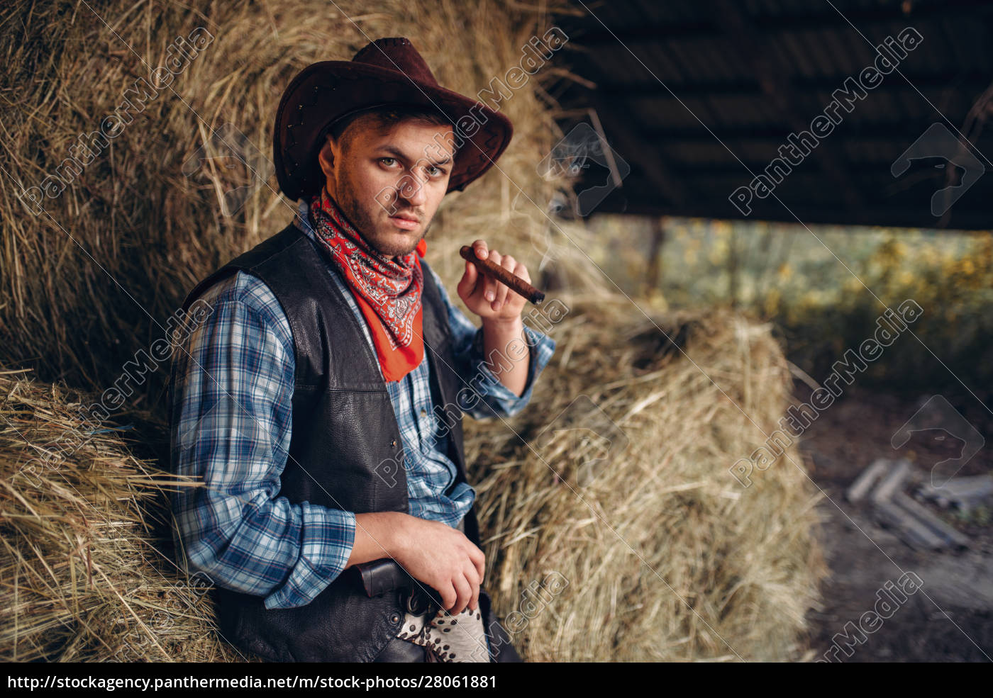 brutal, cowboy, smokes, cigar, , haystack, on - 28061881
