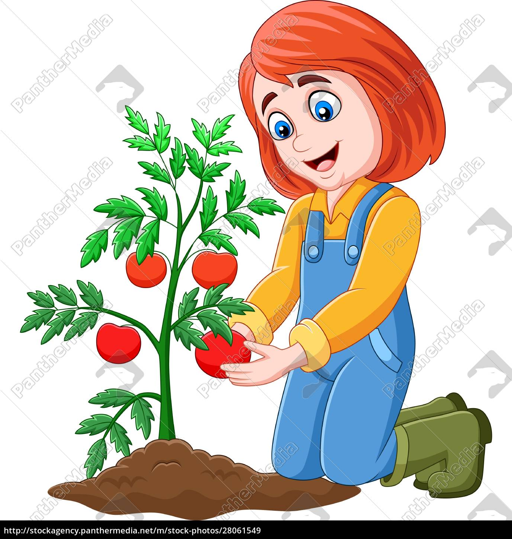 cartoon, girl, harvesting, tomatoes - 28061549