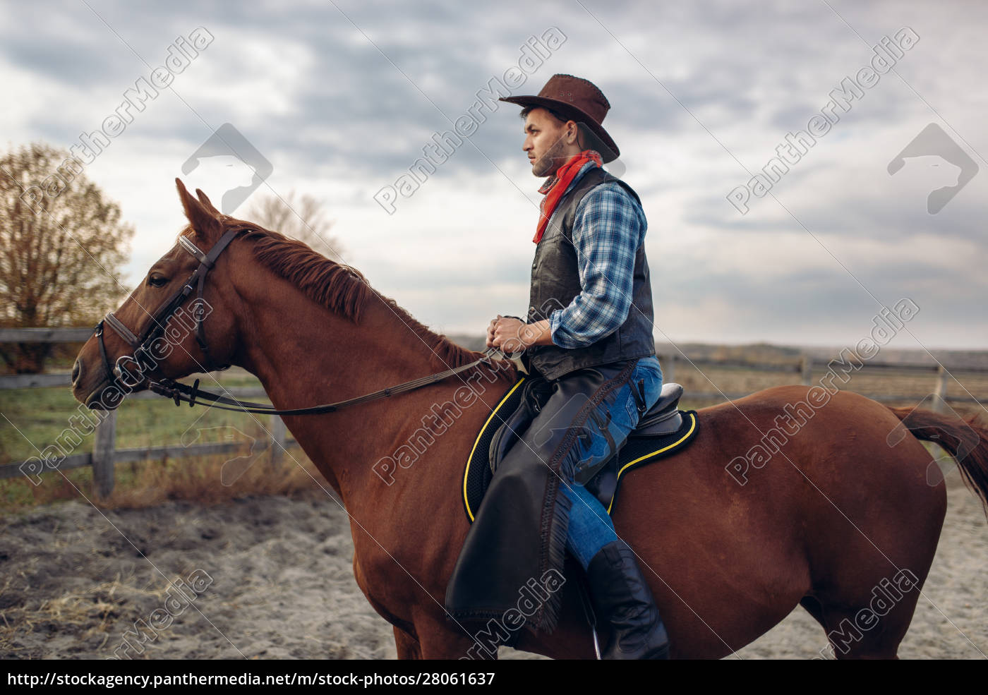 cowboy, riding, a, horse, on, texas - 28061637